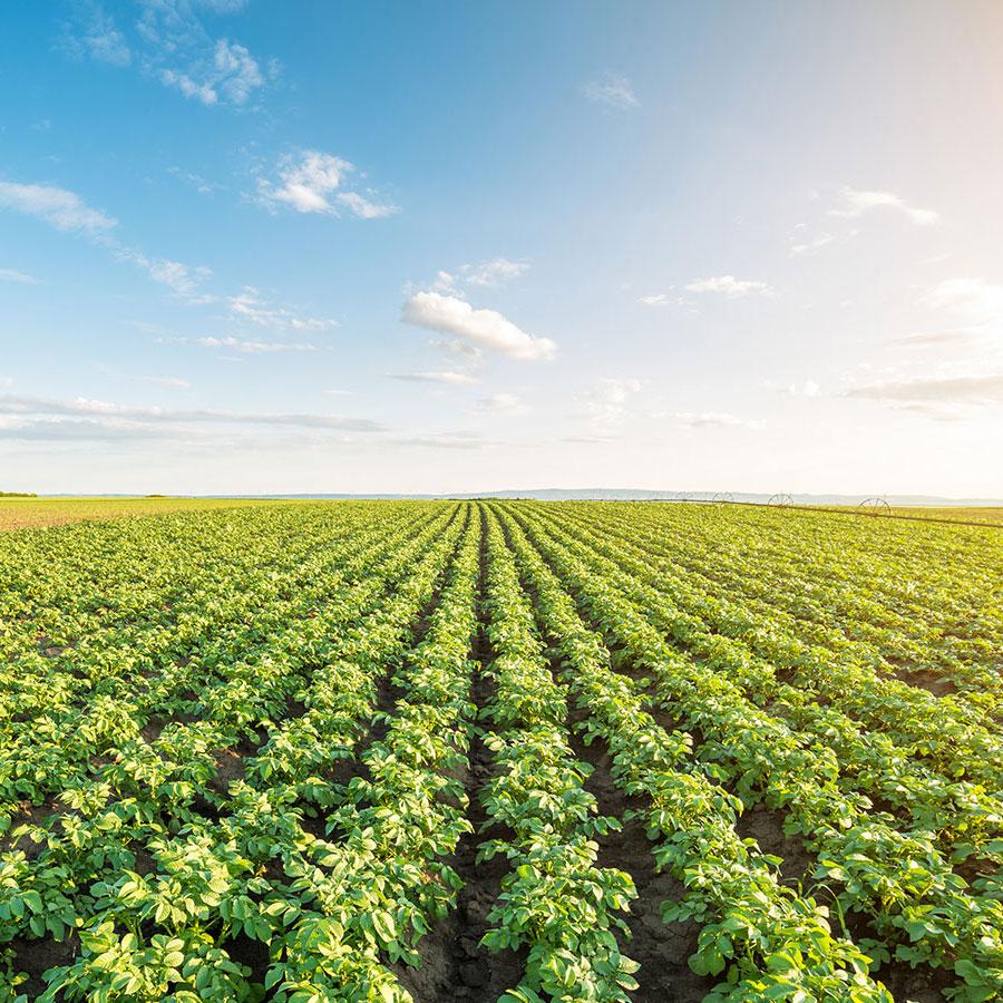 Zonlicht is belangrijk voor planten om voedingsstoffen en energie te produceren. Foto: Shutterstock